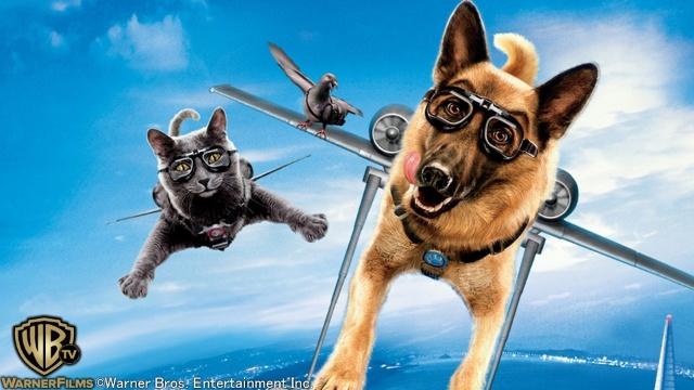 キャッツ&ドッグス 地球最大の肉球大戦争を見逃した人必見!視聴可能な動画見放題サイトまとめ。